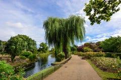 Drottning Mary' s Rose Gardens i Regent' s parkerar, London, UK Royaltyfria Foton