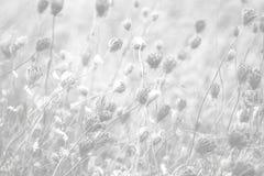 Drottningen Annes snör åt bakgrund fotografering för bildbyråer