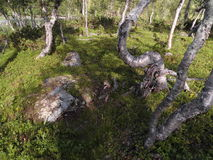 Drottningleden, ферзи отстает, Hemavan, Швеция, Скандинавия Стоковые Изображения RF
