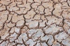 The Drought. Photo was taken on Floreana Island, Galapagos Royalty Free Stock Photos