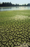 Drought. Cracked mud on the riverside showing drought Royalty Free Stock Photography