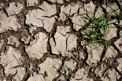 Drought. Group of grass in the drought royalty free stock photography