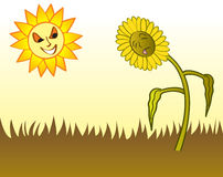 Drought. A hot sun drying out the grass and a flower in the yard during a drought Royalty Free Stock Images