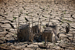 Drought. Dried soil and tree stump Stock Photography