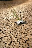 Drought. Skeleton on dry earth, landscape Stock Photos