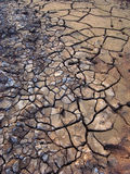 Drought. Mud detail showing different stages of drying Stock Photos