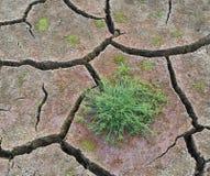 Drought Stock Photos