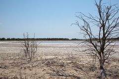 Drought affected land Royalty Free Stock Photography