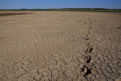 Drought in Africa. Animal tracks in the cracked dry mud is evidence of drought in Africa stock images