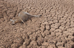 Drought in Australia Royalty Free Stock Images