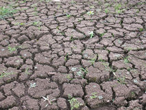 Drought. Background, invoice, dried-up dirt chappy waterless soil Royalty Free Stock Photos