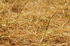 Drought, burnt lawn in the summer Stock Images
