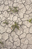 Drought Conditions Royalty Free Stock Photography