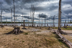 Drought Conditions at a Lake with Dead Trees and Stumps Stock Image