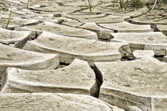 Drought. In countryside in summer with cracks in the ground stock photo