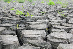 Drought cracked earth Stock Photo