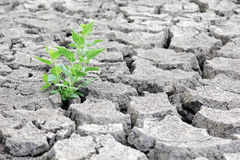 Drought cracked earth Royalty Free Stock Image