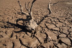 Drought Cracks Royalty Free Stock Photography