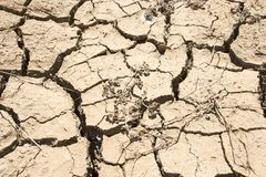 Drought cracks. Broken, crusted mud and dirt as a result of drought, with dried up weeds Stock Photos