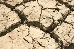 Drought cracks. Broken, crusted mud and dirt as a result of drought, with dried up weeds and some green weed peaking through royalty free stock photo