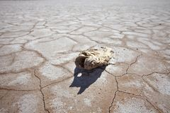 Drought Damage Dead Fish on Dry Lake Royalty Free Stock Images