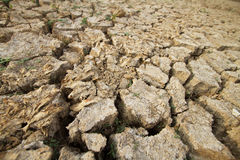 Drought and dead fish on land Royalty Free Stock Images