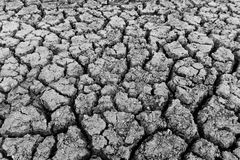Drought royalty free stock image