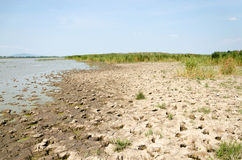 Drought - dry cracked ground and drying out lake. The place is the Hungarian rural in the hot summer. Royalty Free Stock Images
