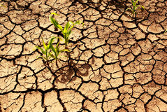 Drought, dry earth. Stock Photography