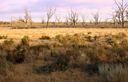 Drought in dry farm land Royalty Free Stock Photography