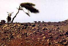 Drought and dryness Stock Photo