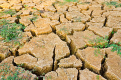 Drought field, drought land. Soil waterless Stock Images