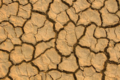 Drought, global warming, environment changes suddenly. Drought, global warming, environment changes suddenly Stock Images