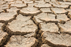 Drought, global warming, environment changes suddenly. Drought, global warming, environment changes suddenly Royalty Free Stock Images