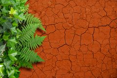 Drought and greenery royalty free stock photo