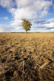 Drought, hot summer Stock Photos