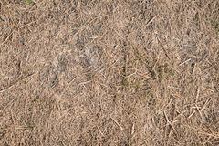 Drought Killed Grass Stock Photo