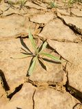 Drought land Royalty Free Stock Photos