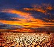 Drought land. In the Gobi desert,Mongolia stock photos