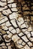 Drought land Stock Photos