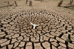 Drought land climate change Stock Photo
