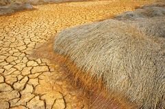 Drought land, climate change, hot summer Stock Images