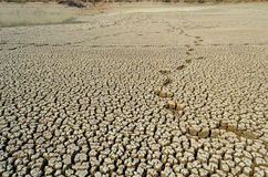 Drought land dry and cracked soil in arid season.  Stock Photos