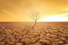 Drought land and hot. Weather and dry tree royalty free stock image
