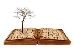 Drought land on the open book. Creative concept image global warming concept. Drought land on the open book Stock Photography