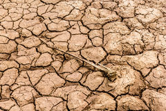 Drought land was cracked. Dry land And the death of the creature Stock Image