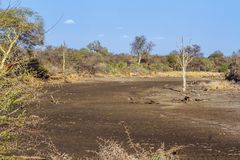 Drought landscape in Kruger National park, South Africa. Dry season in Satara area in Kruger national park, South Africa stock photography