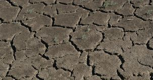Drought in the marshes of Camargue, in the South East of France, Real Time. 4K stock footage