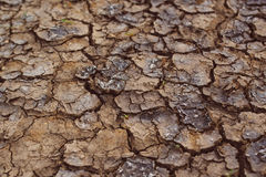 Drought, mud cracks in dry cultivated land Stock Photography