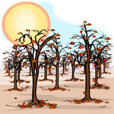 Drought in the orchard. With no chance of rain Royalty Free Stock Photography